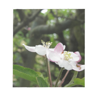 Pink apple flower in spring . Tuscany, Italy Notepad