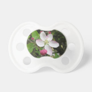 Pink apple flower in spring . Tuscany, Italy Pacifier