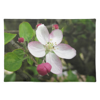 Pink apple flower in spring . Tuscany, Italy Placemat