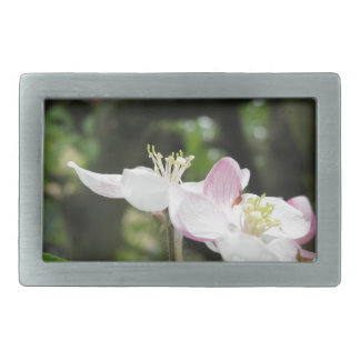 Pink apple flower in spring . Tuscany, Italy Rectangular Belt Buckle