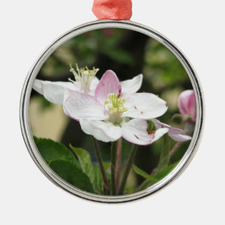 Pink apple flower in spring . Tuscany, Italy Silver-Colored Round Ornament