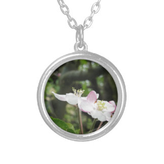 Pink apple flower in spring . Tuscany, Italy Silver Plated Necklace
