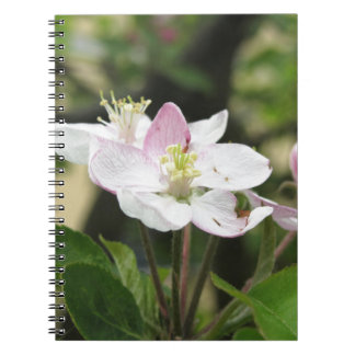 Pink apple flower in spring . Tuscany, Italy Spiral Notebook