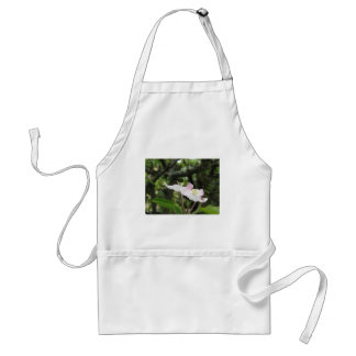 Pink apple flower in spring . Tuscany, Italy Standard Apron