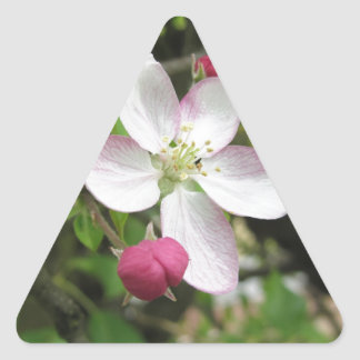 Pink apple flower in spring . Tuscany, Italy Triangle Sticker