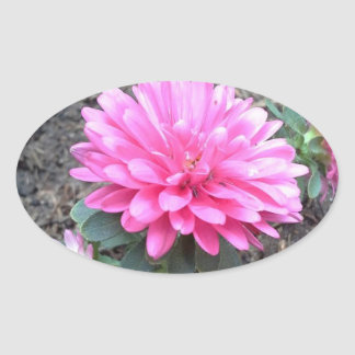 Pink Aster Flowers Oval Sticker