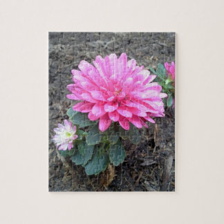 Pink Aster Flowers Puzzle