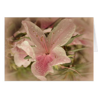 Pink Azalea Card