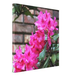 Pink Azalea Flowers Canvas