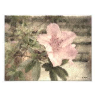 Pink Azaleas 1 Vintage Photo Print