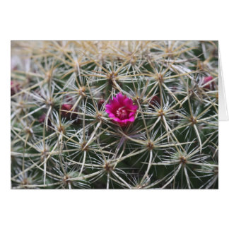 Pink barrel catus bloom card