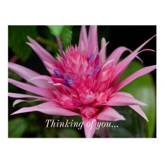 Pink Beauty Postcard