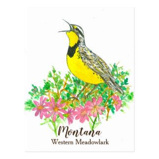 Pink Bitterroot Western Meadowlark Montana Postcard