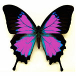 Pink Black and Blue Butterfly For A Friend Photo Sculpture Keychain
