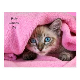 Pink Blankie Baby Siamese Cat Postcard