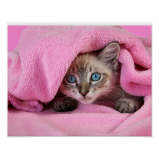 Pink Blankie Baby Siamese Cat Poster