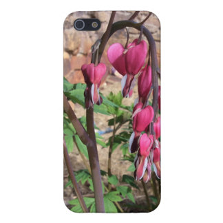 Pink Bleeding Hearts Flowers in Bloom iPhone 5/5S Cover