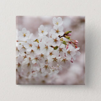 Pink Blossom Buds 2 Inch Square Button