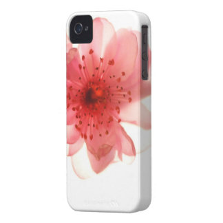 Pink Blossom iPhone 4/4S Case-Mate Barely There™ Case-Mate iPhone 4 Cases
