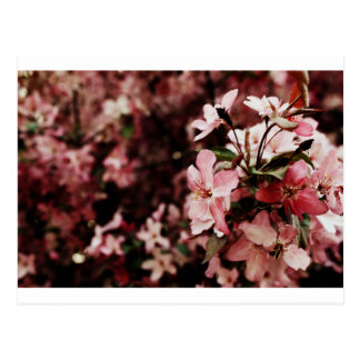 Pink blossom postcard