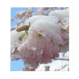 Pink blossom with snow, spring notepad