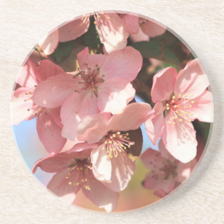 Pink Blossoms Beverage Coasters