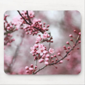 Pink Blossoms in Spring Photo Mouse Pad