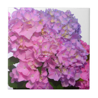 Pink & Blue  Hydrangeas Ceramic Tiles