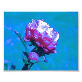 Pink & Blue Neon Photo Print