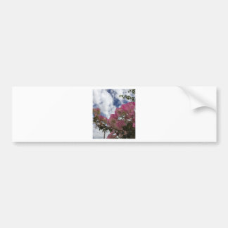 Pink bougainvillea bumper sticker