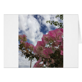Pink bougainvillea card
