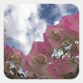 Pink bougainvillea square sticker