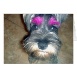 Pink Brow - Miniature Schnauzer Card