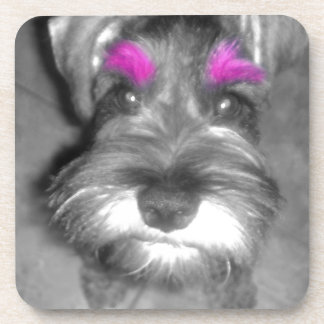 Pink Brow Miniature Schnauzer Puppy Rock & Roll Coaster
