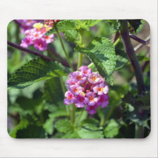 Pink Butterfly Weed Mousepad