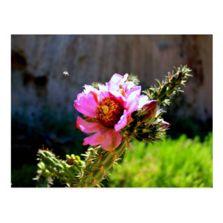 Pink Cactus Bloom with flying bug Postcard