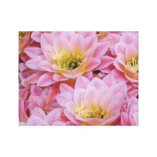 Pink cactus blossoms canvas print