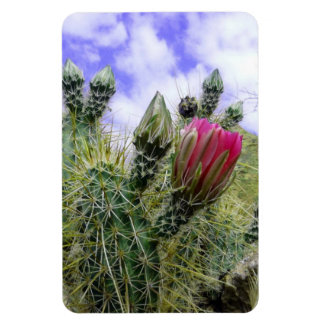 Pink Cactus Flower Rectangular Photo Magnet
