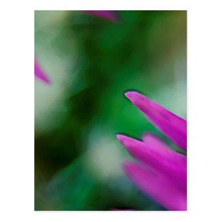 Pink Cactus Petals Postcard