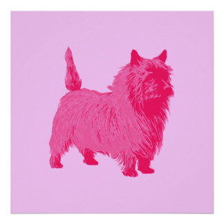 Pink Cairn Terrier Poster