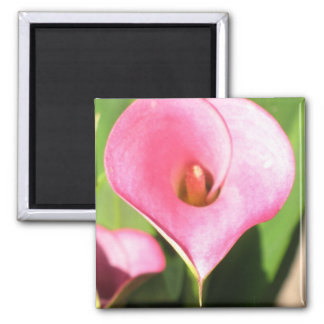 Pink Cala Lily Magnet
