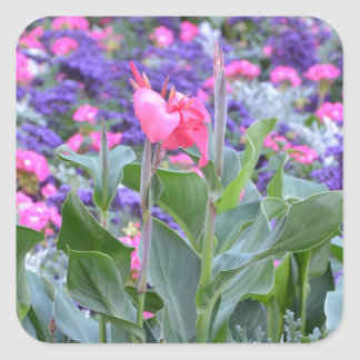Pink calla lily in spring garden square sticker