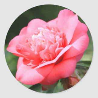 Pink Camelia Flower Sticker