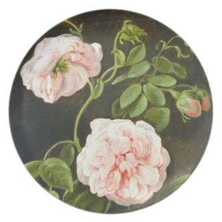 Pink Camellias Friedrich Tischbein Fine Art Plate