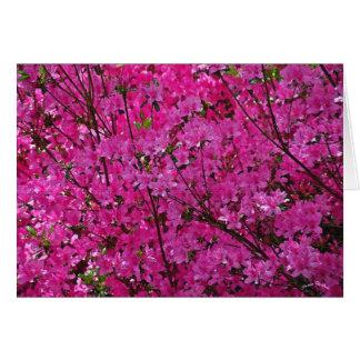 Pink! Card