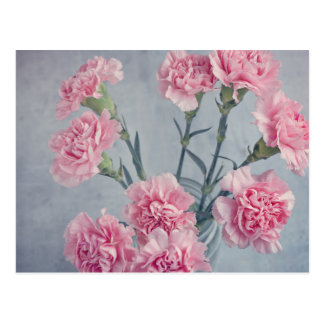 Pink Carnations Postcard