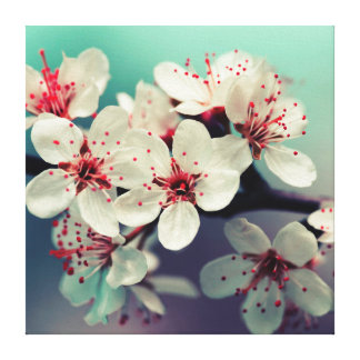 Pink Cherry Blossom, Cherryblossom, Sakura Canvas Print
