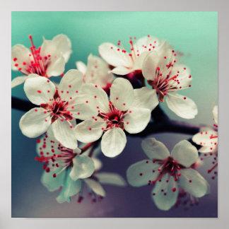 Pink Cherry Blossom, Cherryblossom, Sakura Poster