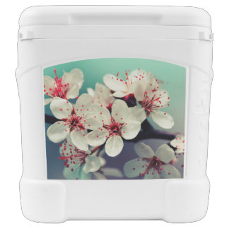 Pink Cherry Blossom, Cherryblossom, Sakura Rolling Cooler