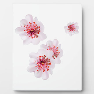 Pink cherry blossom sakura flowers  in Japanese st Plaque